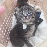 警戒心ゼロの超甘えた子猫達 サムネイル5