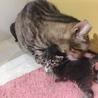 警戒心ゼロの超甘えた子猫達 サムネイル7
