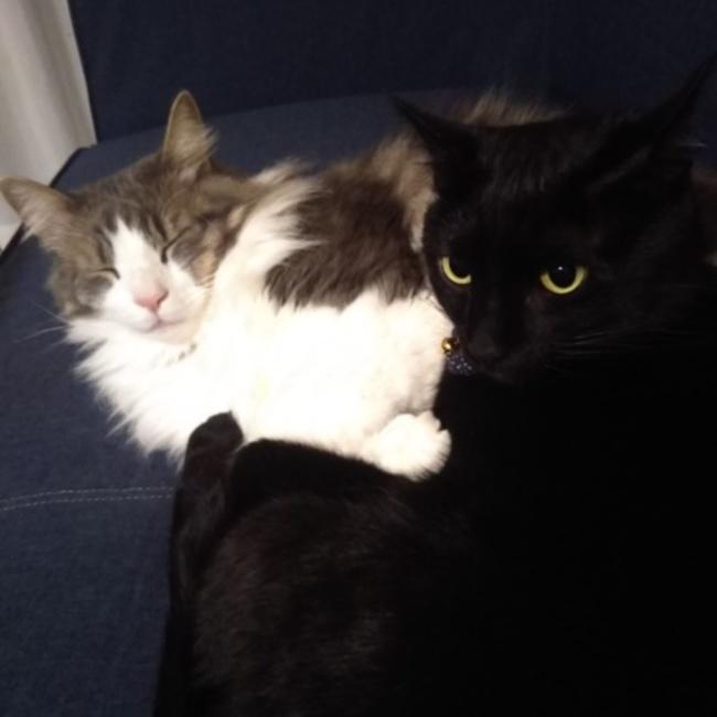 ツナ&ジジ&リンのカバー写真