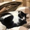 綺麗でおとなしい猫ちゃんの里親募集 サムネイル4