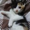 かわいい女の子♪生後1ヶ月 サムネイル5