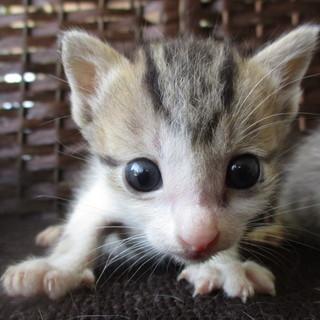 センターからレスキューした子猫ちゃん。