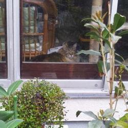 姿が見えない猫の幽霊!