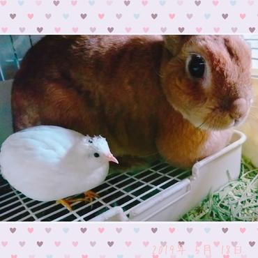 仲良しの2羽
