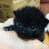 警戒心ゼロの超甘えた子猫達 サムネイル2