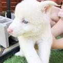 人間大好き!綺麗な瞳の女の子/小さめ中型犬