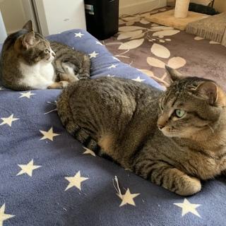 可愛い猫ちゃん2匹(姉妹猫)