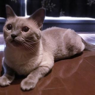 MIX☆かわいい女の子です