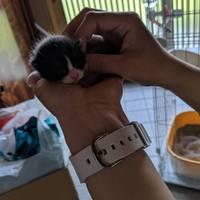 令和生まれの可愛い子猫