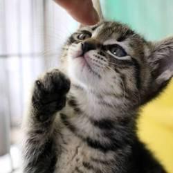 三重県桑名市5月26日(日)第94回リトルパウエイド猫の譲渡会