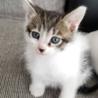 子猫の里親様を探しています。
