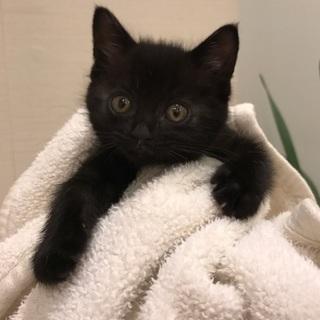 THE・黒猫のザック君