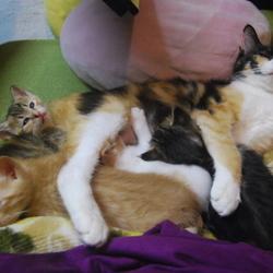 黒猫のクロと三毛猫のミケ(と夢見るトビシロ)