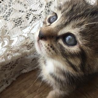 可愛い仔猫