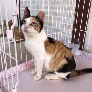 【5/26⭐️堺東にて里親会】参加猫のノンちゃん!