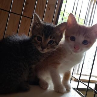 可愛い兄弟猫
