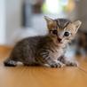 ちいさなキジトラ仔猫