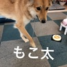 元野犬のモコ太 トレーニング済み