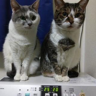 札幌 猫 里親募集中です。
