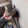【5/26⭐️堺東にて里親会】参加猫のみーちゃん! サムネイル5