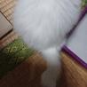 生後2ヶ月未満の白猫です① サムネイル5