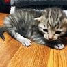 令和元年1日産まれの子猫
