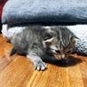 令和元年1日産まれの子猫 サムネイル2