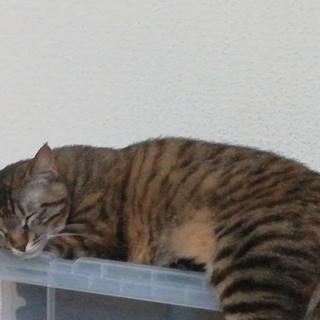 甘えん坊猫2歳