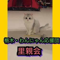 栃木・わんにゃん応援団   譲渡会 サムネイル1