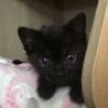 まっくろくろすけとママの黒猫親子