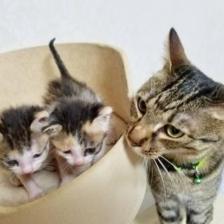 生後1ヶ月の三毛猫姉妹