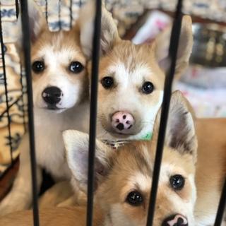 可愛い仔犬達、男の子1匹女の子2匹