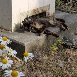 捨てられた猫さん?