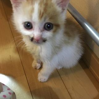 子猫 1ヶ月齢