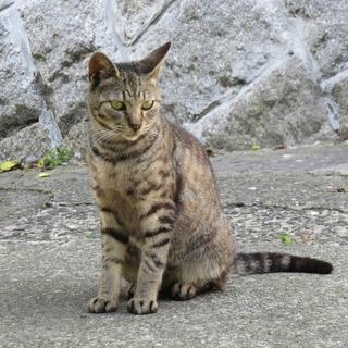 ちょっと臆病、だけど人懐っこく、猫にも積極的に挨拶