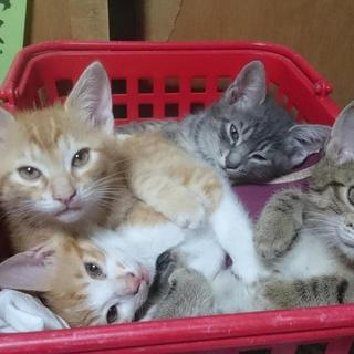 2ヶ月の子猫4匹