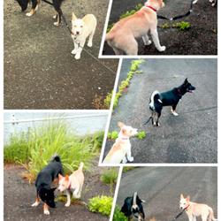 初めての2匹一緒のお散歩