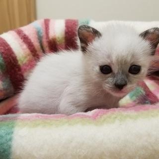 動画あり 母猫と7匹の子猫達 4月28日産まれ