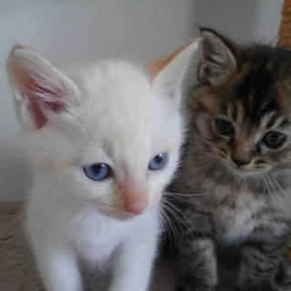 ブルーの瞳 綺麗な男の子と 可愛い 三毛ちゃん