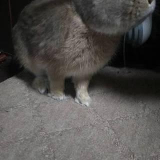 ネザー×ミニウサギのmix