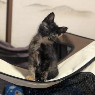 美人で賢いサビ猫です