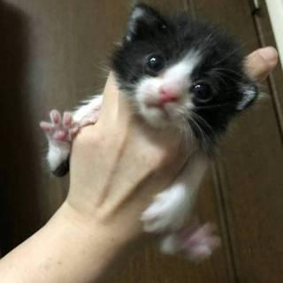 小さな黒白ちゃん