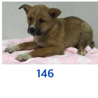 2匹兄妹の子犬たち。助けて下さい。146番