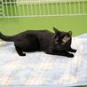 譲渡対象猫の紹介です サムネイル4
