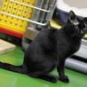 譲渡対象猫の紹介です サムネイル6