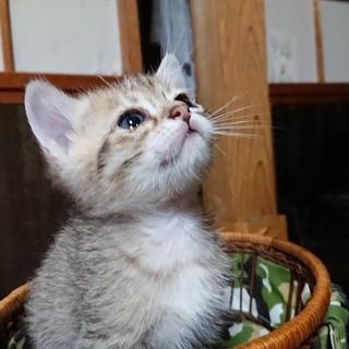 子猫3姉妹家族募集