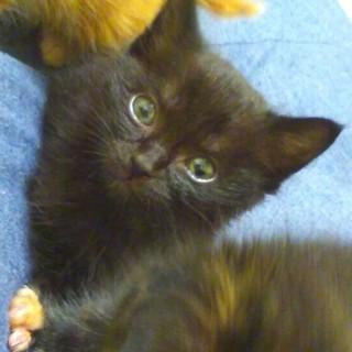 長いしっぽにくりくりお目目の人懐こい黒猫の大輝くん