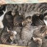 GW明けに仔猫が産まれました。