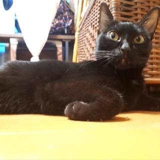 控えめな黒猫りんちゃん♡゙ずっとのおうちを募集中!