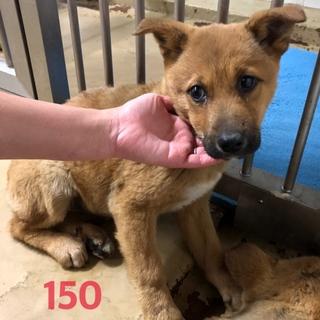 2匹姉妹の子犬です。助けて下さい。150番